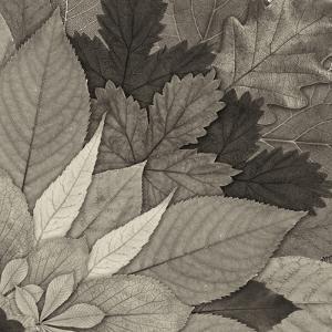 Leaf Mandala B by THE Studio