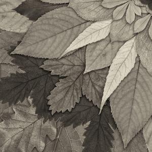Leaf Mandala C by THE Studio