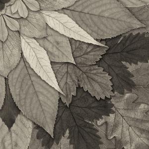 Leaf Mandala D by THE Studio