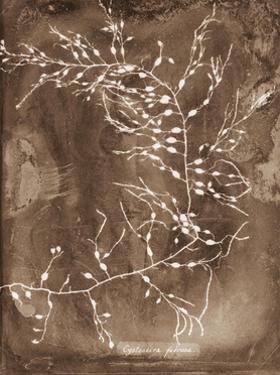 Natural Forms Sepia 2 by THE Studio
