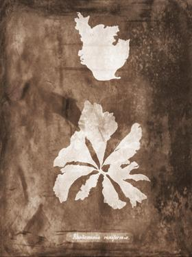 Natural Forms Sepia 9 by THE Studio