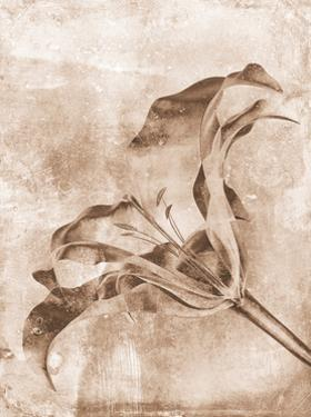Sepia Flower Inversions 3 by THE Studio