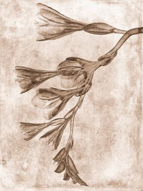 Sepia Flower Inversions 4 by THE Studio