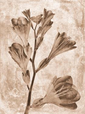 Sepia Flower Inversions 5 by THE Studio