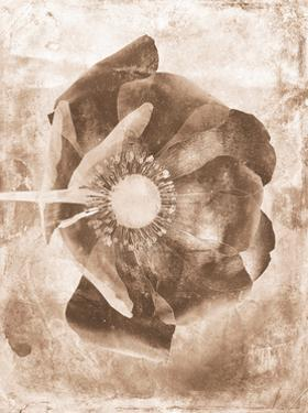 Sepia Flower Inversions 6 by THE Studio