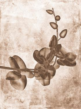Sepia Flower Inversions 7 by THE Studio