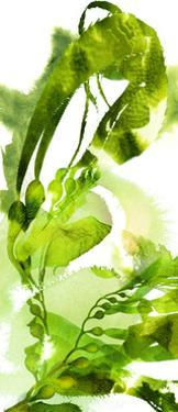 Watercolor Botanicals 1 by THE Studio
