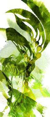 Watercolor Botanicals 2 by THE Studio