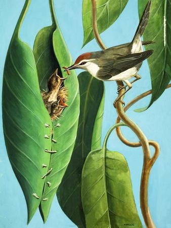https://imgc.allpostersimages.com/img/posters/the-tailor-bird-1970_u-L-PCHK3L0.jpg?artPerspective=n