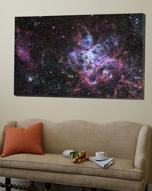 The Tarantula Nebula