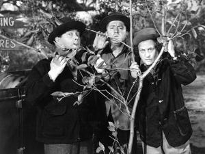 The Three Stooges: Three Tree Saps