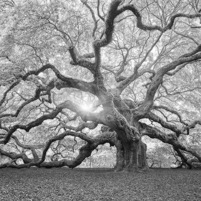 https://imgc.allpostersimages.com/img/posters/the-tree-square-bw-2_u-L-Q12ULVO0.jpg?artPerspective=n