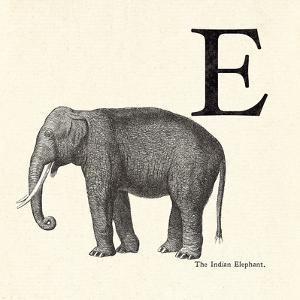 Animal Alphabet - E by The Vintage Collection