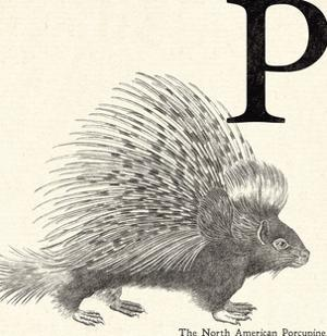 Animal Alphabet - P by The Vintage Collection