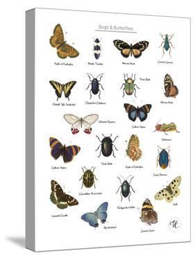 Discovery Charts - Bugs & Butterflies by The Vintage Collection