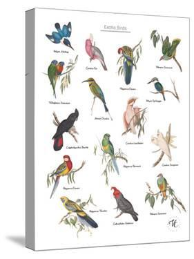 Discovery Charts - Exotic by The Vintage Collection