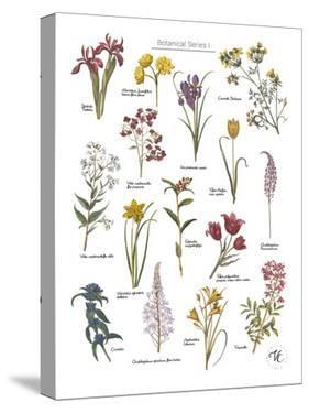 Discovery Charts - Floral by The Vintage Collection
