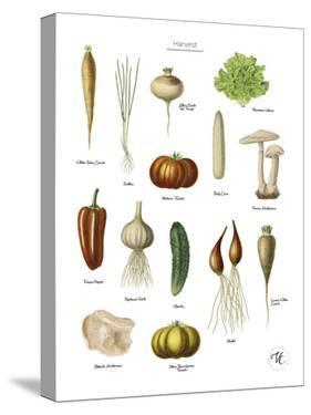 Discovery Charts - Harvest by The Vintage Collection