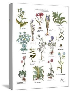 Discovery Charts - Plant by The Vintage Collection