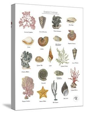 Discovery Charts - Seabed by The Vintage Collection