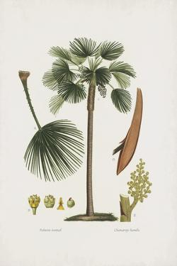 European Fan Palm by The Vintage Collection