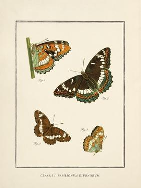 Papilio Collectio by The Vintage Collection