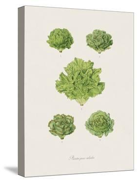 Plantes Pour Salades by The Vintage Collection