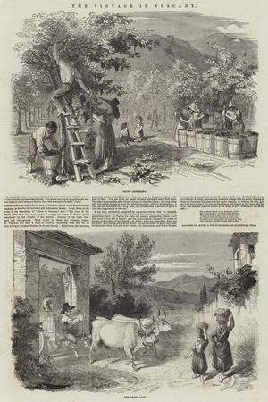 https://imgc.allpostersimages.com/img/posters/the-vintage-in-tuscany_u-L-PVBW1K0.jpg?p=0