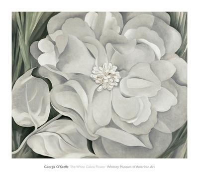 https://imgc.allpostersimages.com/img/posters/the-white-calico-flower-c-1931_u-L-F54AGD0.jpg?artPerspective=n