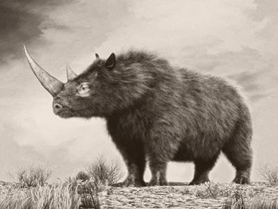 The Woolly Rhinoceros Is an Extinct Species from the Pleistocene Epoch