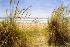 Dune Grass 3 by Thea Schrack