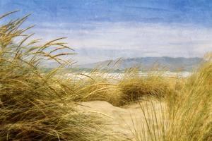 Dune Grass 4 by Thea Schrack