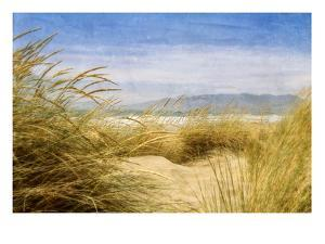 Dune Grass 4 by Thea Schrack