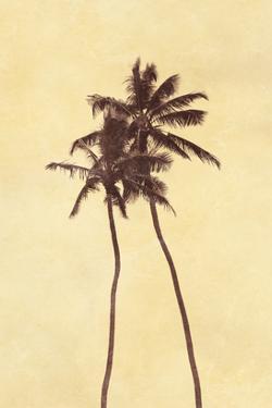 Palm Vista I by Thea Schrack