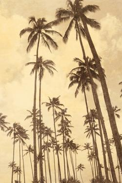 Palm Vista V by Thea Schrack