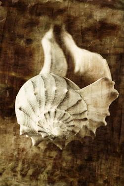 Seaside Portrait III by Thea Schrack
