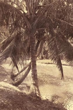 Under the Palm by Thea Schrack