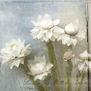 Winged Everlasting 3 by Thea Schrack