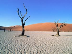 Desert in Namib Naukluft Park - Namibia by Theo Allofs