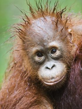 Orangutan baby by Theo Allofs