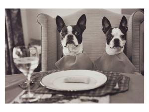 Boston Terriers Dining by Theo Westenberger