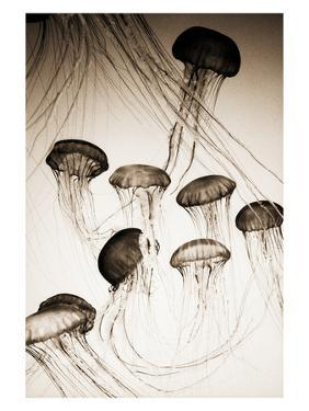 Jellyfish in Motion 3 by Theo Westenberger