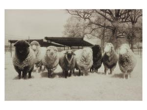 Sheep Committtee by Theo Westenberger