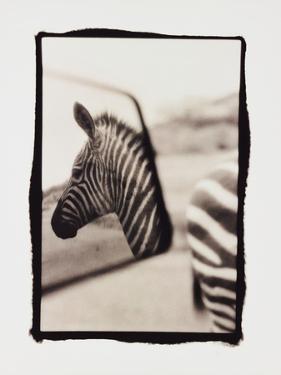 Zebra in the Mirror 1 by Theo Westenberger
