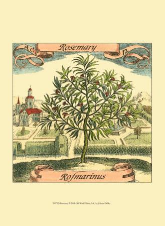 Rosemary by Theodor de Bry