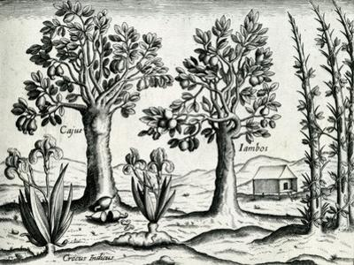 Landscape from 'India Orientalis', 1598 by Theodore de Bry