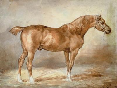 A Docked Chestnut Horse