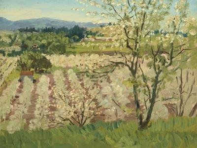 Prune Orchard, Los Gatos, California
