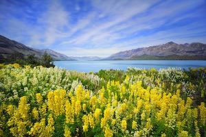 Lake Wakatipu by Thienthongthai Worachat