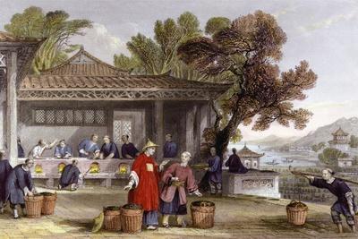 Tea Culture Preparation